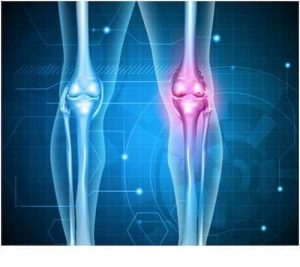 Synovial Fluid – Human Joints Care