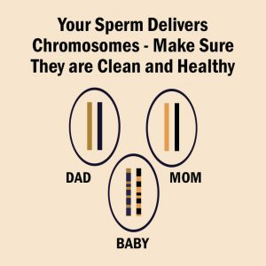 increase sperm count spermax